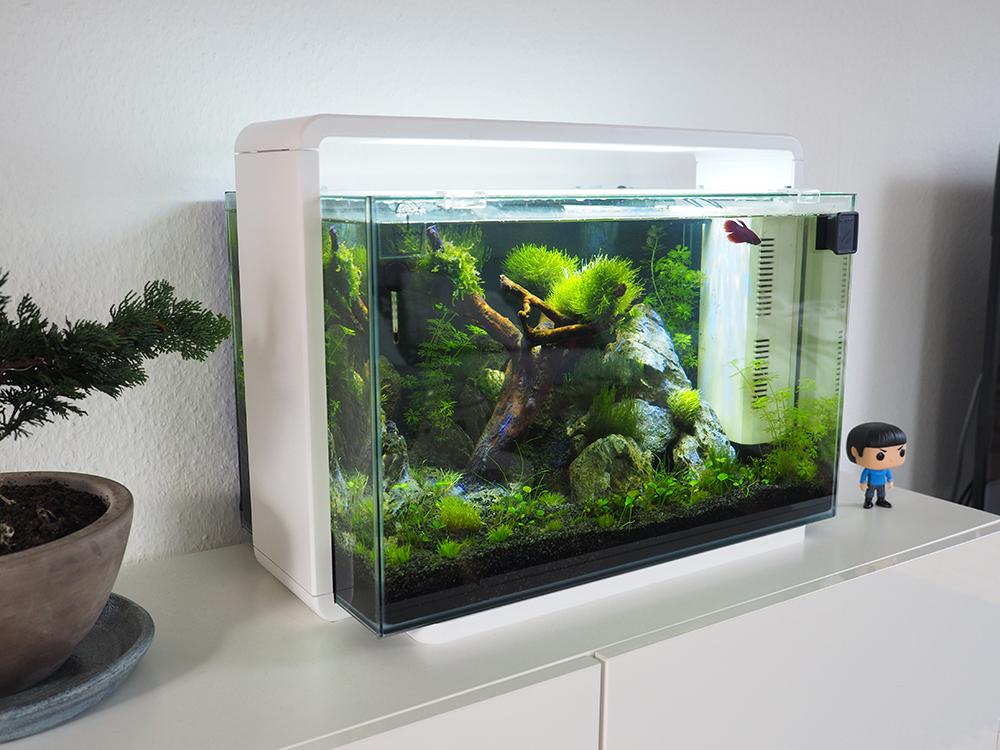 nano aquarium einrichten leicht gemacht. Black Bedroom Furniture Sets. Home Design Ideas