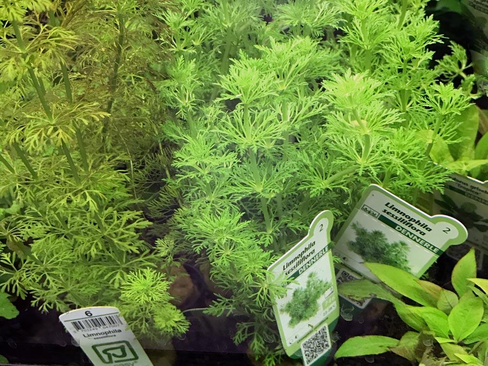 Ideale Pflanzen für das Nano-Aquarium