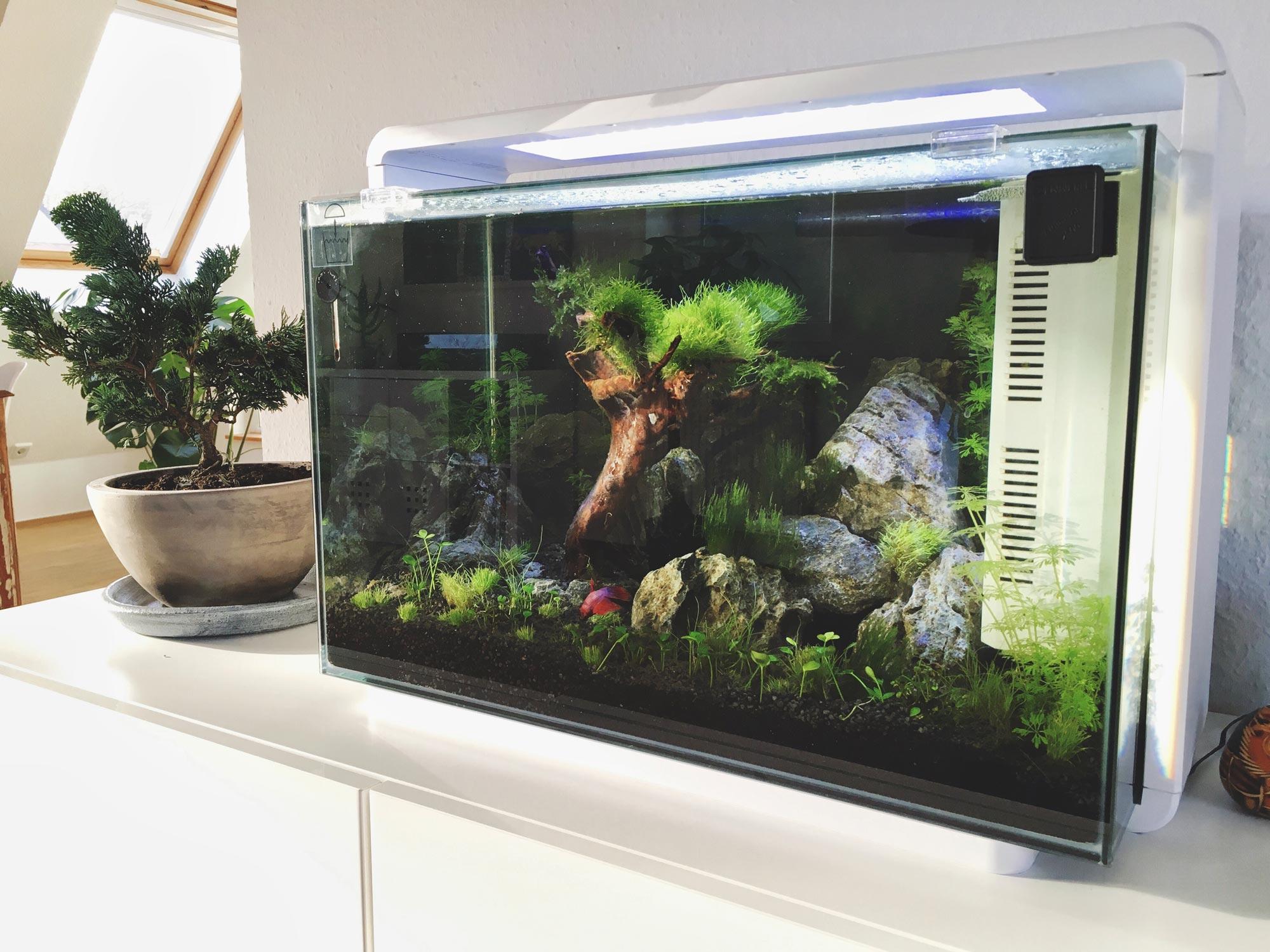 Aquarium auf Sideboard