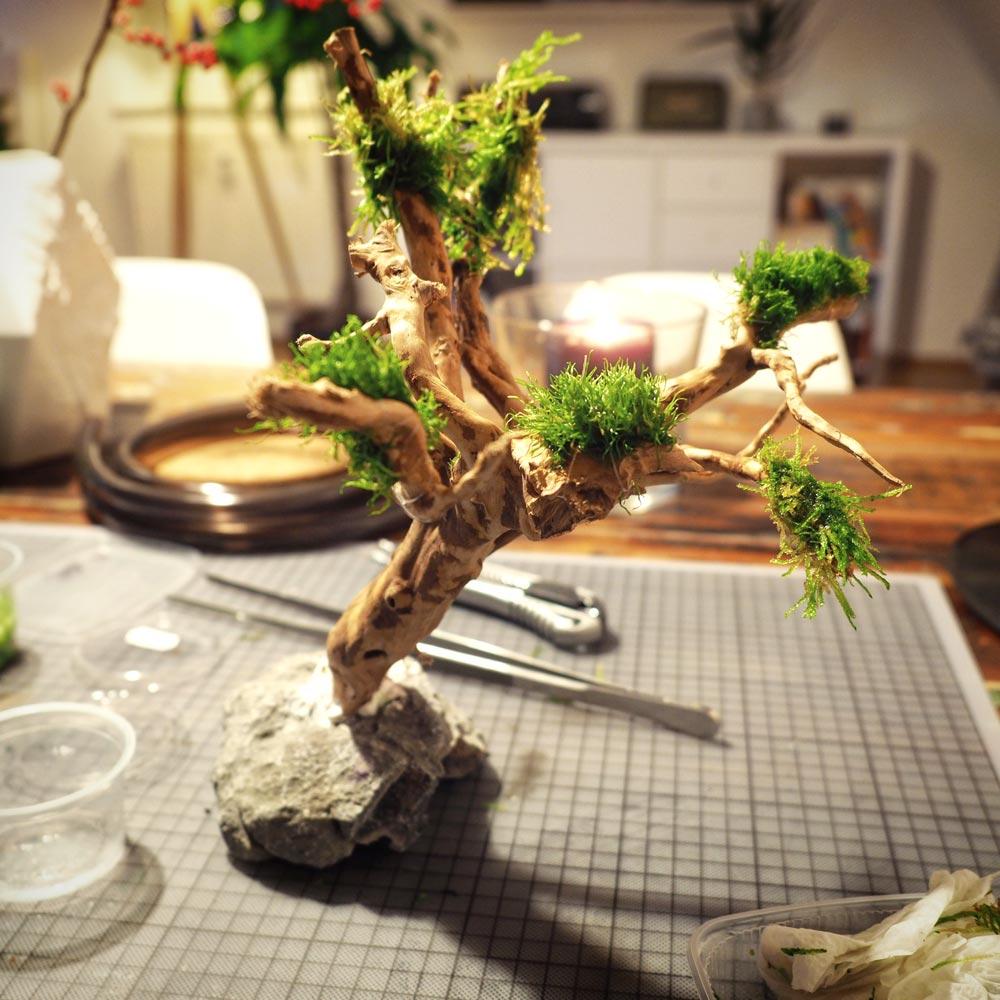 Bonsai Baum fürs Nano-Aquarium